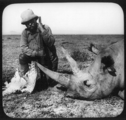 Photo of Teddy Roosevelt with a rhino