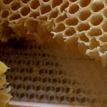 Apiological: mathematical speculations about bees (Part 1: Honeycomb geometry)