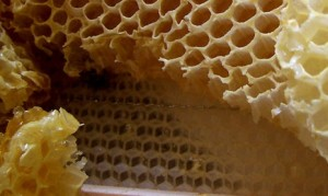 Wax honeycomb foundation