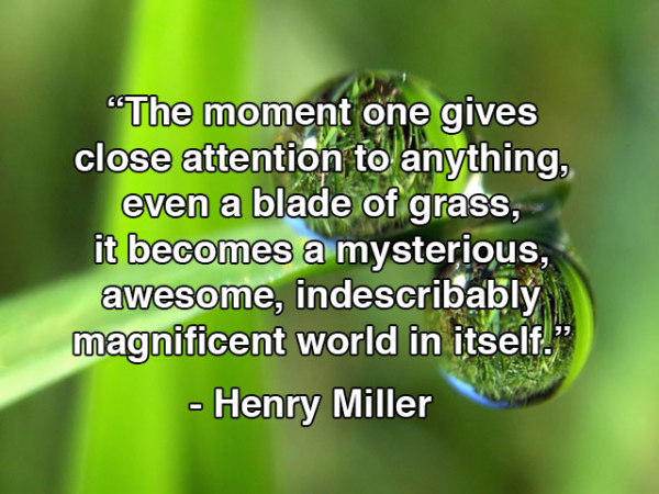 """The moment one gives close attention to anything, even a blade of grass, it becomes a mysterious awesome, indescribably magnificent world in itself."" - Henry Miller"